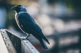 How to ensure your windows are bird-safe