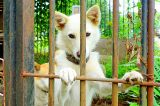Taiwan Becomes First Asian Country to Ban Consumption of Dogs, Cats