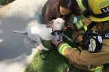 Ventura Fire Crew Rescues Family Dog from Blaze