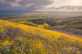 Trump Administration Again OKs Oil Drilling in California's Carrizo Plain National Monument
