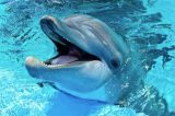 Mexico City Passes Landmark Dolphin Captivity Ban